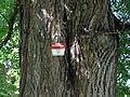 Wien-Penzing - Naturdenkmal 779 - Denkmalschild am Stamm der Winterlinde (Tilia cordata).jpg