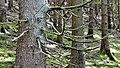WikiMUC - Fototour Gleißental 05.jpg