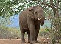 Wild Elephant 2 by N A Nazeer.jpg