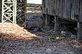 Wild Komodo dragon - Komodo island (16932211578).jpg