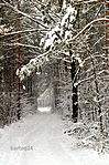 Winter road (16475501611).jpg