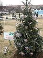 Wisconsin Tree.JPG