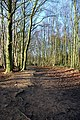 Wither Wood - Denby Dale - geograph.org.uk - 498261.jpg