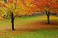 Wonderful autumn leaves in the Hexham Abbey Garden - panoramio - somaliayaswan.jpg