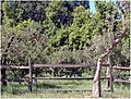Wood Fence and Apples, Oak Glen, CA.6-23-12 (7449462798).jpg