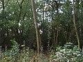 Woodland besideTrans Pennine Trail - geograph.org.uk - 1467587.jpg