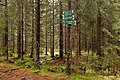 Woods near Sognsvann - panoramio (1).jpg