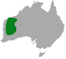 Woolley's False Antechinus area.png