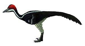 Zanabazar (dinosaur) - Life restoration of Zanabazar junior