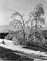 Zimska pokrajina 1929.jpg