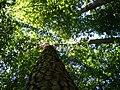 Zirc-Arborétum - panoramio (1).jpg
