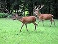 Zoo-Dortmund-IMG 5471-a.jpg