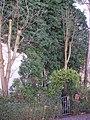 Zugewuchert wie im Märchen (2008-04) - panoramio.jpg