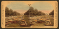 (The sunken) gardens, Fairmount Park, Philadelphia, from Robert N. Dennis collection of stereoscopic views.png