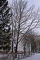 «Платани ім. З. І. Довголюка» в Чорткові P1190302.jpg
