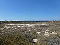 Αλίπεδο στη Χρυσή - Salt flats on Chrysi 01.jpg
