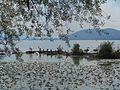 Λίμνη Καστοριάς (Ορεστιάδα) 01.jpg