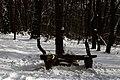 Голосіївський ліс DSC 0113.jpg