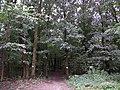 Голосіївський парк ім. Рильського М. Т. 03.jpg