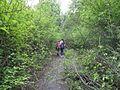 Дендрологічний парк 118.jpg
