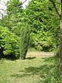 Донецкий ботанический сад 010.jpg