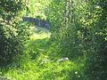 Зелёная листва. (verdure) - panoramio.jpg