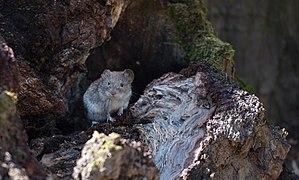 Знайомство з лісовою малечею.jpg