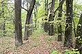 Иславское Усадьба парк 1 Московская область.jpg
