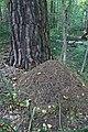 Кошеляевское болото - 2.jpg