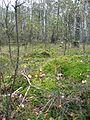 Мохнатая поляна - panoramio.jpg