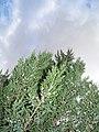Олександрія - panoramio (42).jpg