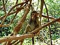 Остров обезьян Lingshui Island of monkeys - panoramio (2).jpg