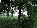 Парк шума Гази Баба во мај (158).JPG