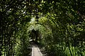 Парк інституту ім. В. П. Філатова, арки з троянд.jpg
