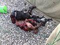 Тело участника незаконных вооружённых бандформирований. Чечня, Российская Федерация, 2000е гг..jpg