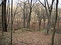 Украина, Киев - Голосеевский лес 216.JPG