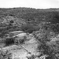 יערות הכרמל צילום טים גידל 1937 (בתוך אלבום יערות הכרמל - נהריה )-PHAL-1620409.png