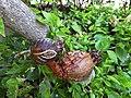 ציפור מנקרת מפסולת חומרים מן הטבע.jpg