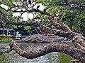 中山公園水池橋樑(屏東公園).jpg