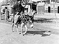 北京騎驢的老人.jpg