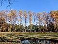 宇都宮中央公園 2011年11月 - panoramio.jpg