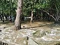 宝安西湾红树林公园 1.jpg