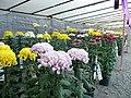 山形市菊花展 Yamagata City Chrysanthemum Show - panoramio.jpg