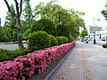 渡辺翁記念会館 - panoramio (5).jpg
