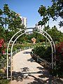 玫瑰园 - Rose Garden - 2011.05 - panoramio.jpg