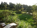 03838jfPaddy fields village Baliuag Bulacan Candaba Pampanga Bridge Roadfvf 06.JPG