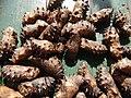 05005jfPulilan Resort Bulacan caterpillars Havenfvf 06.JPG