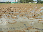 09461jfRoads Paddy fields Domesticated ducks Paligui Candaba Pampangafvf 21.JPG