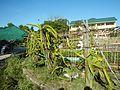 09471jfAlexis G. Santos National High School Liciada, Bustos Bulacanfvf 37.jpg