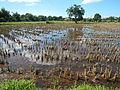 09676jfLandscapes Grasslands Plaridel Bypass Road Bonga Menor Bustos Bulacan Villagesfvf 22.JPG